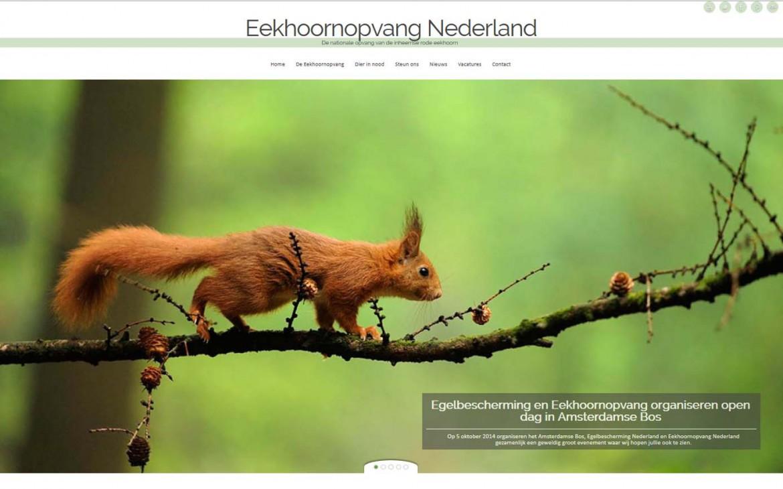 Nieuwe website voor Eekhoornopvang Nederland!