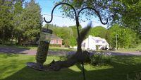 Eekhoorns die uit boom vallen nog een raadsel