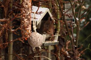 Moederdag ook voor eekhoornmoeders!